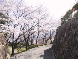 亀居城 春の桜