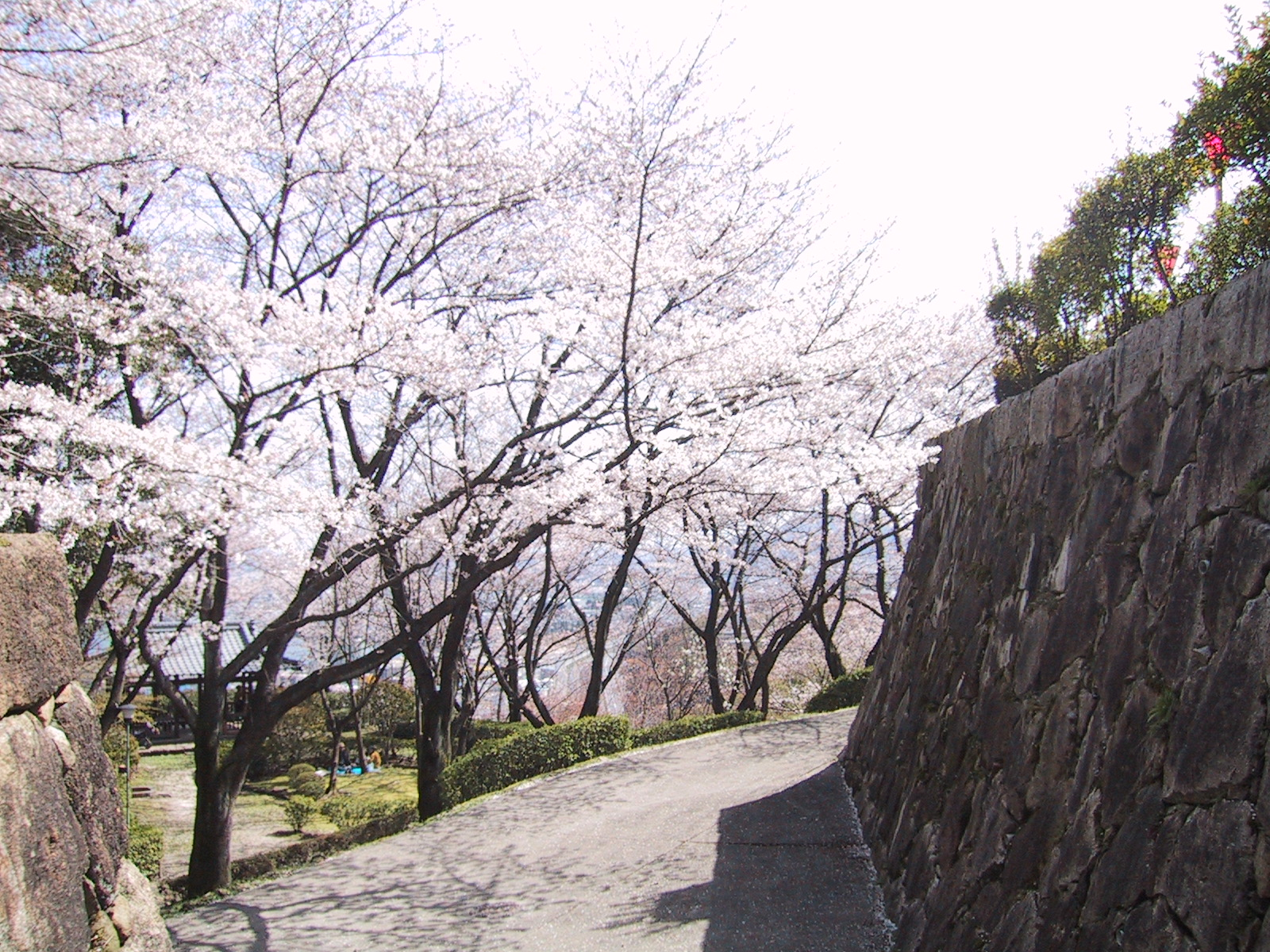 「亀居公園 桜」の画像検索結果